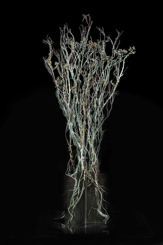 mythe nature plante bronze sculpture art écologie ronces arbre
